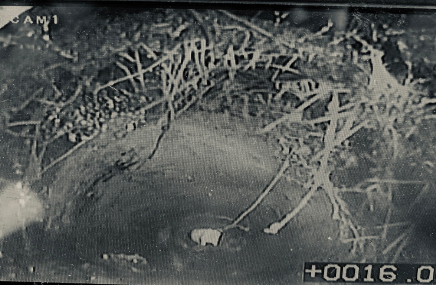 An image of roots in the drain showing up on the CCTV